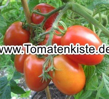tomaten f r den balkon tomaten k rbiskiste. Black Bedroom Furniture Sets. Home Design Ideas